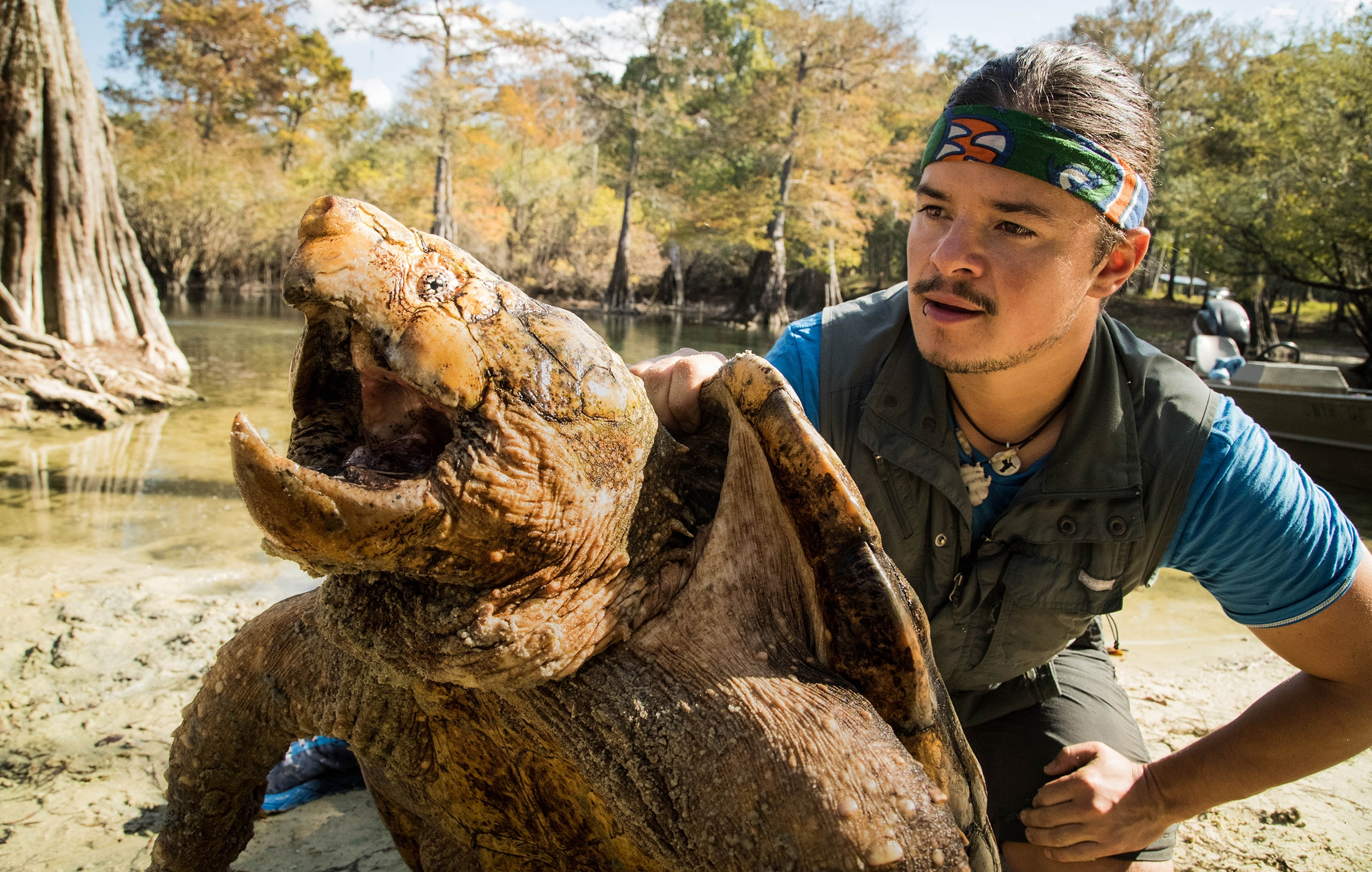 """Nat Geo filmmaker Filipe DeAndrade gets up close with a 100-pound alligator snapping turtle found with IFAS researchers on the Suwannee River. Admiring the creature's strength and design, DeAndrade jokes that the turtle's 1,000-pounds-per-square-inch jaw pressure """"is capable of circumcising a dinosaur!"""""""